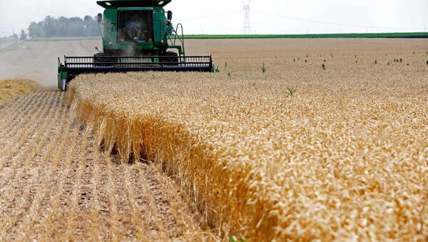 A combine drives over stalks of soft red winter wheat during the harvest on a farm in Dixon, Illinois (File) - Sputnik International