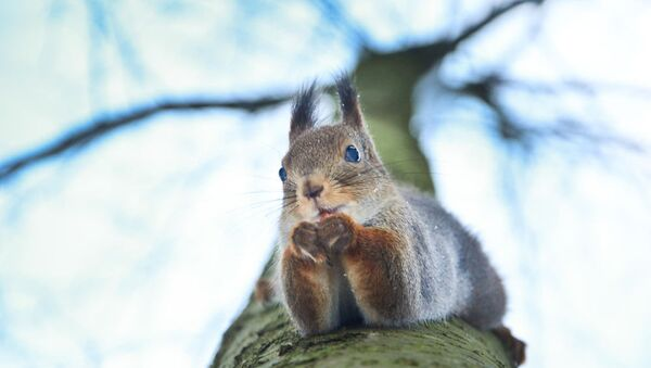 Squirrel - Sputnik International