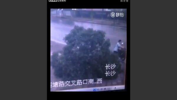 Man Kills Tree to Steal Bike - Sputnik International