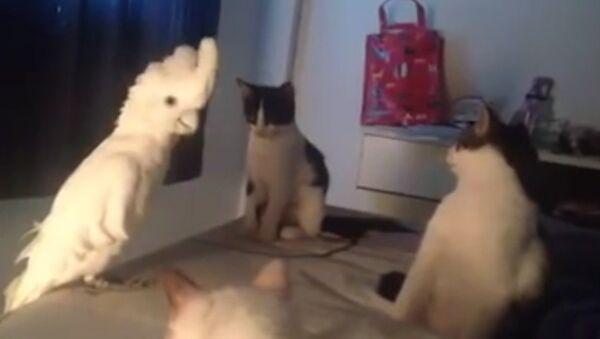 Parrot's Amazing Cat Impression - Sputnik International