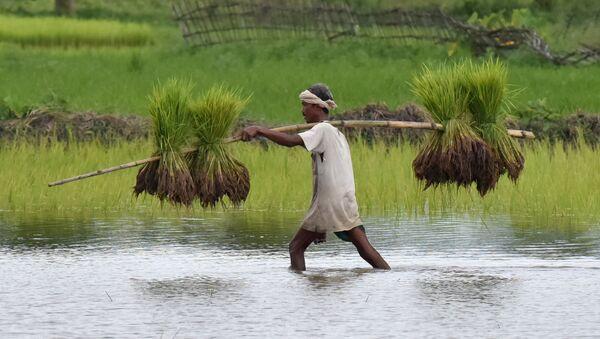 Индийский фермер во время сельскохозяйственных работ - Sputnik International
