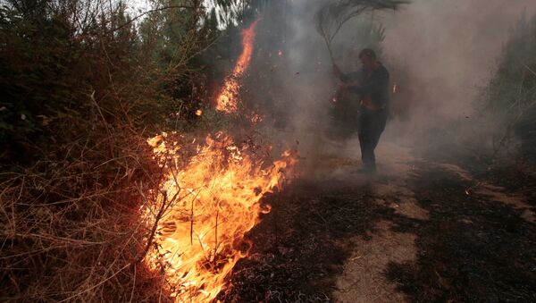 A man works to extinguish a forest fire in Arbo in the northwest Spanish region of Galicia, August 11, 2016 - Sputnik International