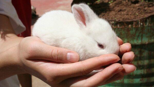 White rabbit - Sputnik International