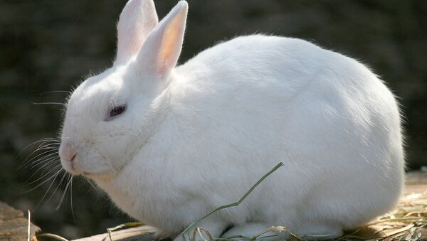Rabbit - Sputnik International