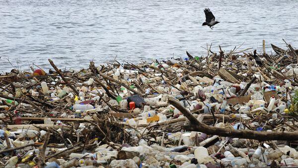 A bird flies past dumped plastic bottles and other garbage - Sputnik International