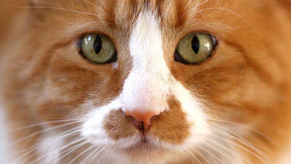 Cat Ripper in Croydon is an Alien - Sputnik International
