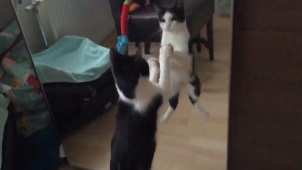 Cat fights own reflection - Sputnik International
