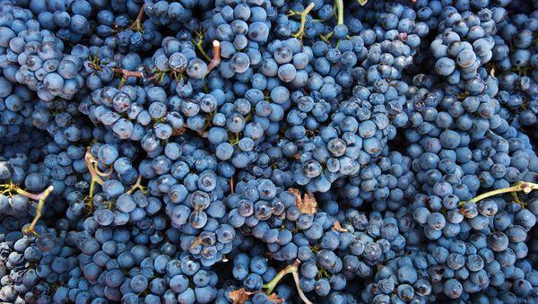 UPPA Winery in Crimea - Sputnik International