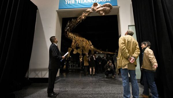 A replica of a 122-foot-long titanosaur on display at the American Museum of Natural History in New York. - Sputnik International