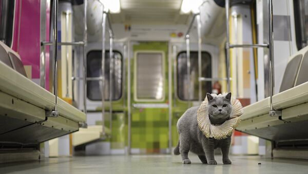 British Cat Becomes a Passenger on Shakespeare's Train in Moscow Metro - Sputnik International