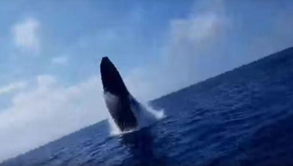 Humpback Whale Surprises Fishing Party - Sputnik International