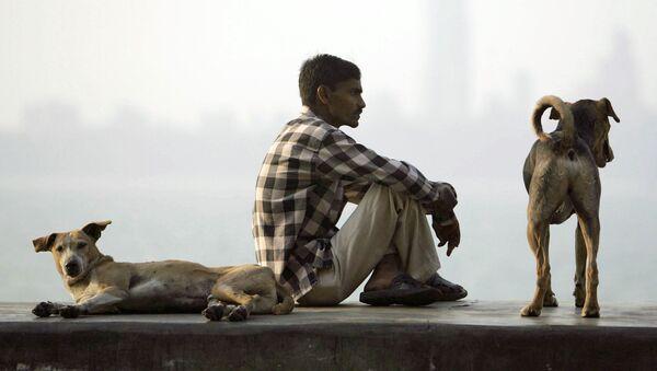 Dogs - Sputnik International