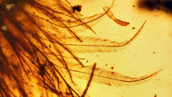 Dinosaur Tail in amber - Sputnik International