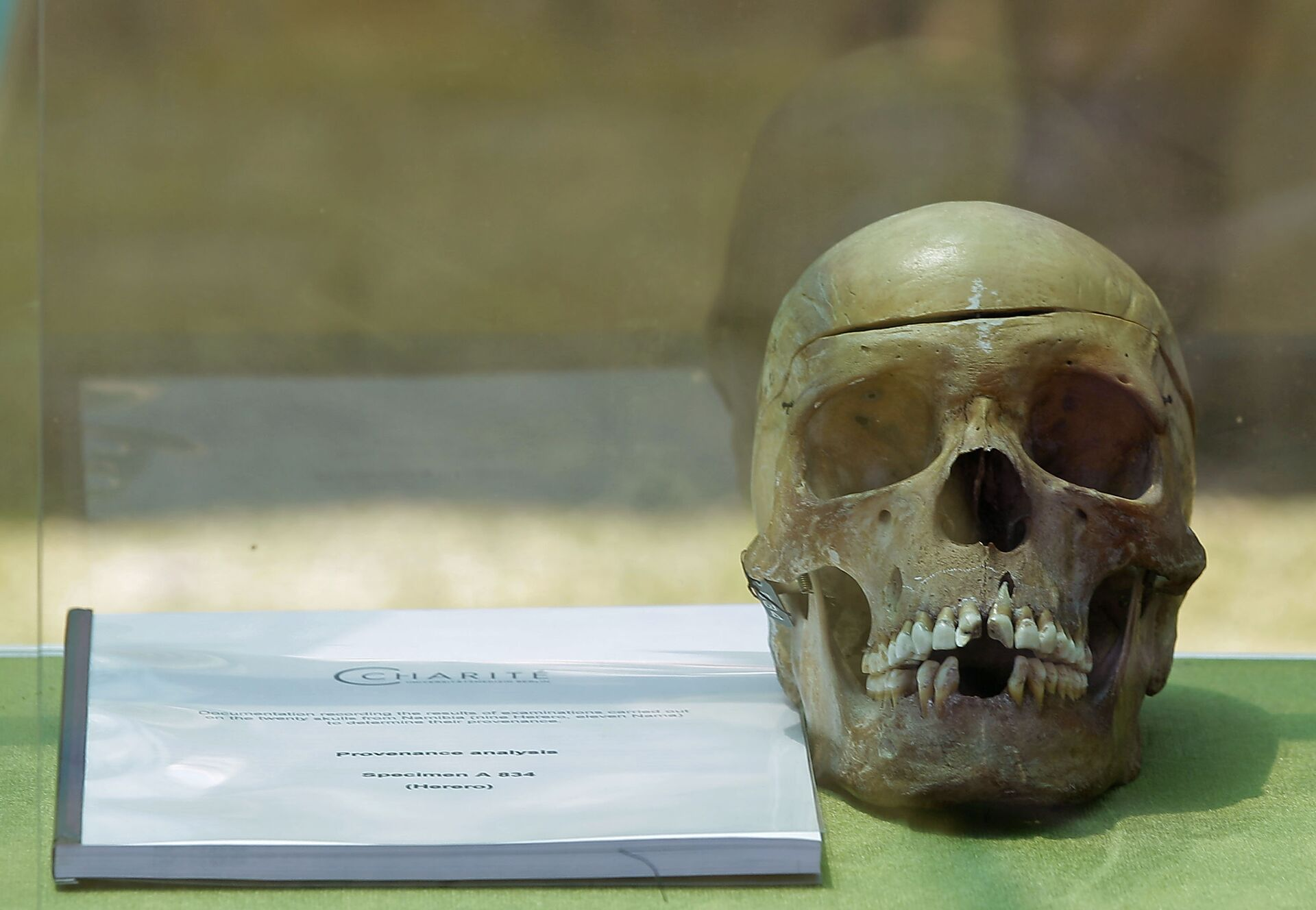A skull from Germany on display in the city of Windhoek, Namibia, Tuesday, Oct 4, 2011. Hundreds of Namibians welcomed home the skulls of ancestors taken to Germany for racist experiments more than a century ago. The skulls are testimony to the horrors of colonialism and German cruelty against our people, Prime Minister Nahas Angula said at an airport ceremony, The Namibian nation accepts these mortal remains as a symbolic closure of a tragic chapter. - Sputnik International, 1920, 23.09.2021