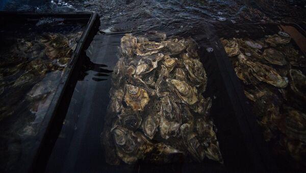 Oysters - Sputnik International