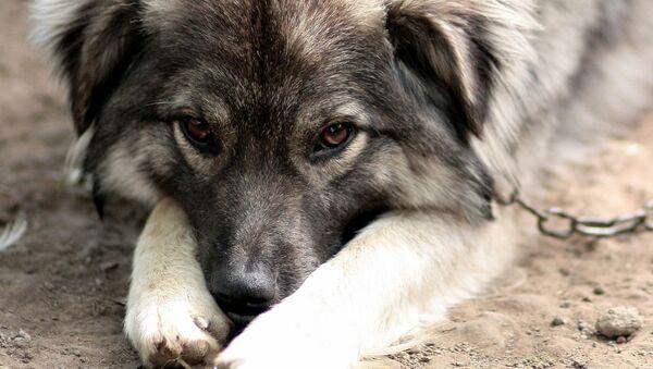 Dog - Sputnik International