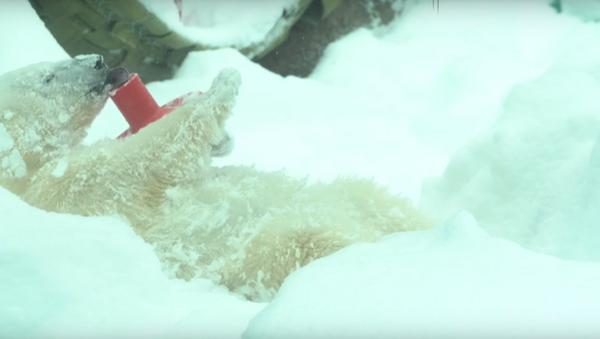 Making Snow Angels… Zoo Style - Sputnik International