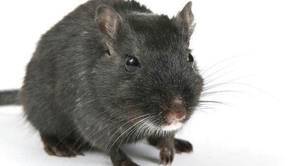 Mouse - Sputnik International