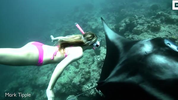 Freediving With Giant Manta Rays - Sputnik International