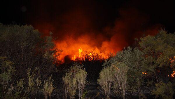 A bushfire in Australia - Sputnik International
