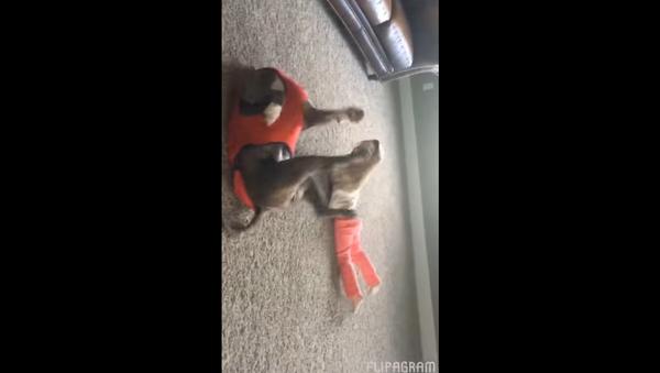 Pittie Does a Cartwheel with Best Friend - Sputnik International
