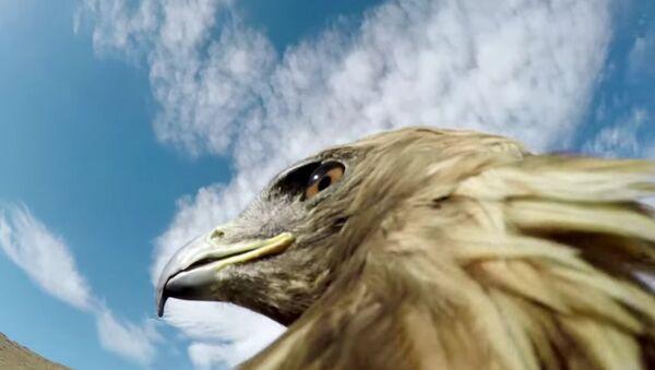 GoPro: Hunting a Fox From an Eagle's POV - Sputnik International