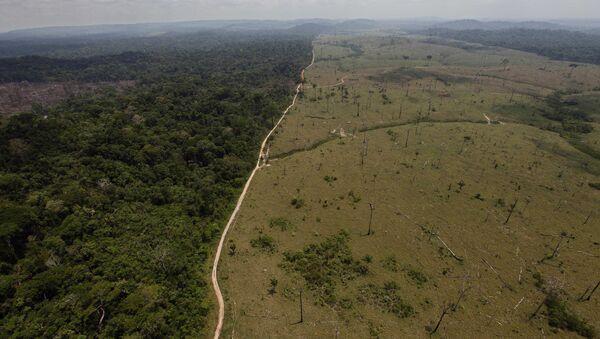 Deforested area is seen near Novo Progresso in Brazil's northern state of Para - Sputnik International