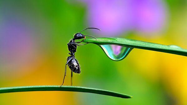 Life Through 'Challenge': Best of the 6th Hamdan International Photography Award - Sputnik International