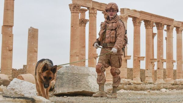 Engineers at the International Main Action Center of the Russian Armed Forces clear the historical part of ancient Palmyra of mines. - Sputnik International