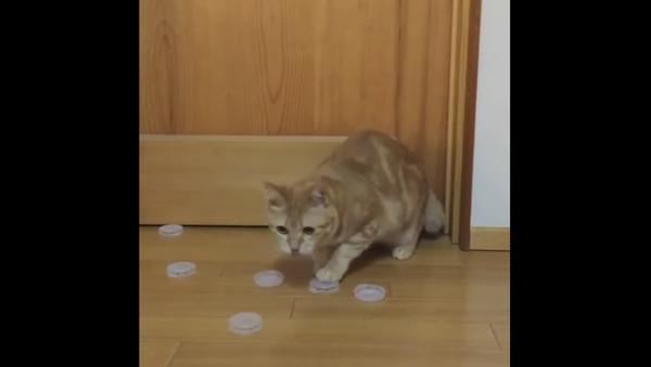 Kitty Practices Goalie Skills - Sputnik International
