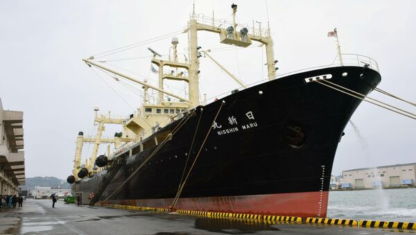 Japanese whaling vessel the Nisshin Maru returns to the Shimonoseki port in southwestern Japan after it and two other vessels hunted 333 minke whales in the Antarctic Ocean - Sputnik International