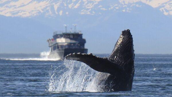 Humpback whale - Sputnik International