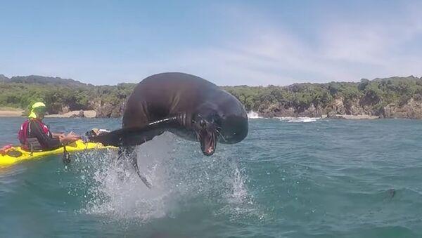 Sea Lion Leaps Over Kayakers - Sputnik International