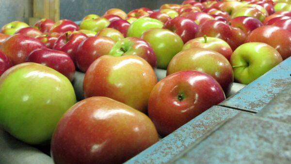 apples moving along a conveyor line - Sputnik International
