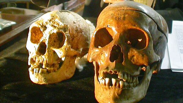 The skull, left, of a 54,000-year-old species, known as Homo floresiensis, is displayed next to a normal human's skull, right, at a news conference in Yogyakarta, Indonesia Friday, Nov. 5, 2004. H floresiensis was nicknamed the hobbits due to their diminutive size. - Sputnik International