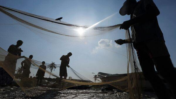 Sri Lankan fishermen sort their catch in a fishery harbor in Colombo, Sri Lanka (File) - Sputnik International