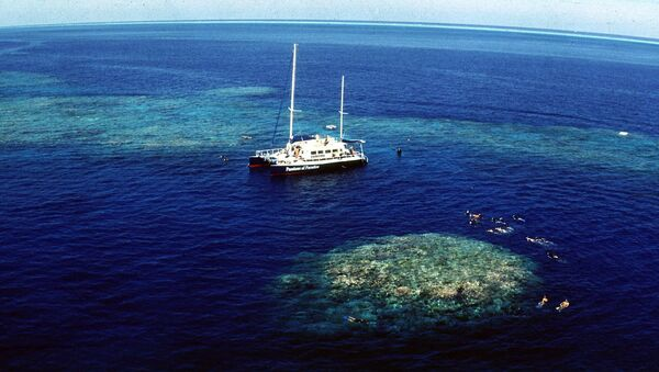 Tourists snorkel around Upolu Cay on the Great Barrier Reef near Cairns off the Australian north east coast - Sputnik International