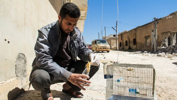 A Syrian man collects and bags the body of a dead bird, reportedly killed by a suspected toxic gas attack in Khan Sheikhun, in Syria's northwestern Idlib province, on April 5, 2017 - Sputnik International