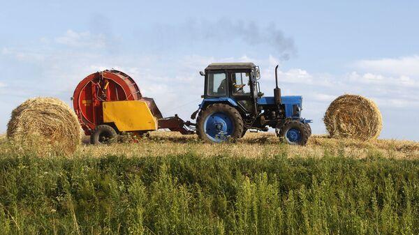Harvesting grain crops in Belarus - Sputnik International