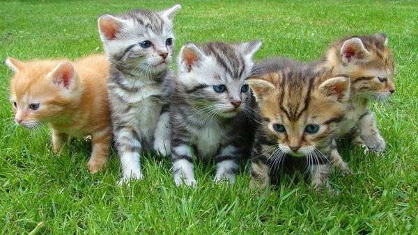 Kittens - Sputnik International