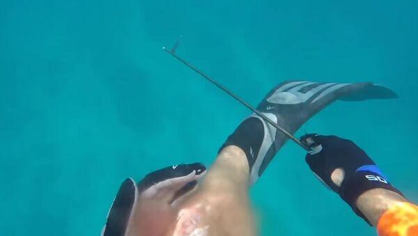 Man Attacked by Shark in the Florida Keys - Sputnik International