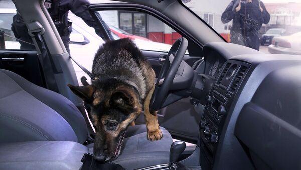 Police dog - Sputnik International