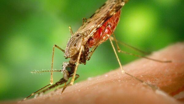 Malaria - Sputnik International