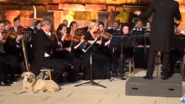 Fur-tuoso Pup Steals the Show from Vienna Orchestra - Sputnik International