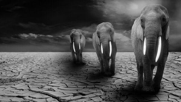 Elephants - Sputnik International