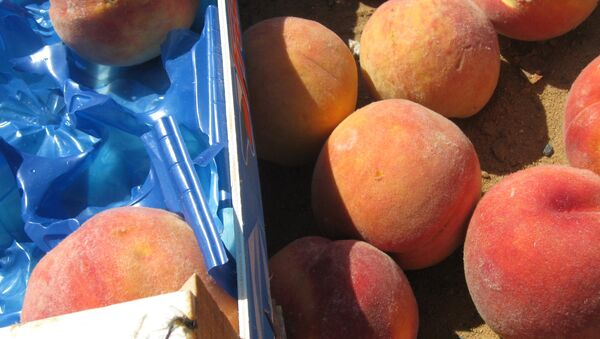 A batch of European sanction products (peaches) eliminated as part of the activities of the Federal Service for Veterinary and Phytosanitary Surveillance in the Bryansk Region - Sputnik International