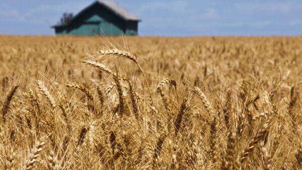 US Wheat - Sputnik International