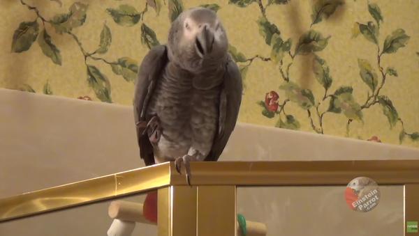Romantic Parrot Invites Owner to Candlelight Dinner - Sputnik International