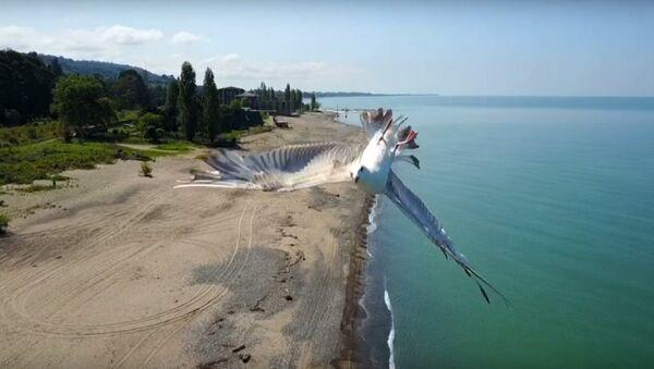 Mavic Pro vs Seagull - Sputnik International