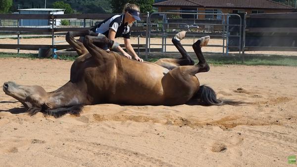 Horse Channels Inner Dog to Get Belly Rubs - Sputnik International